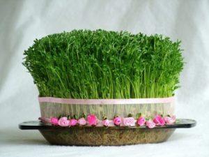 خرید سبزه,آموزش کاشت سبزه,قرار گیری در نور مناسب,سبزه عید نوروز,رویش سبزه