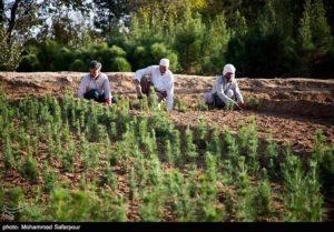 دشت وسیع,شهرداری,استان تهران,کاشت درخت