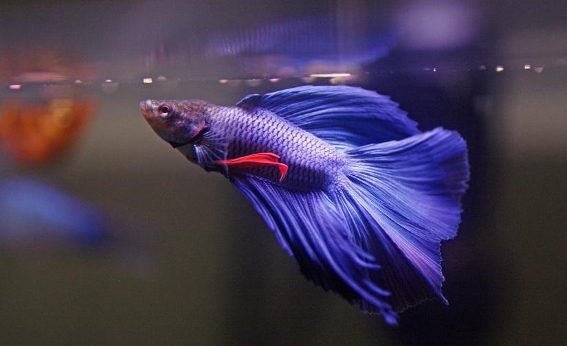 دیدن ماهی در خواب